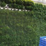 Sanjay Nursery Vertical Garden green wall contact no.9822332167