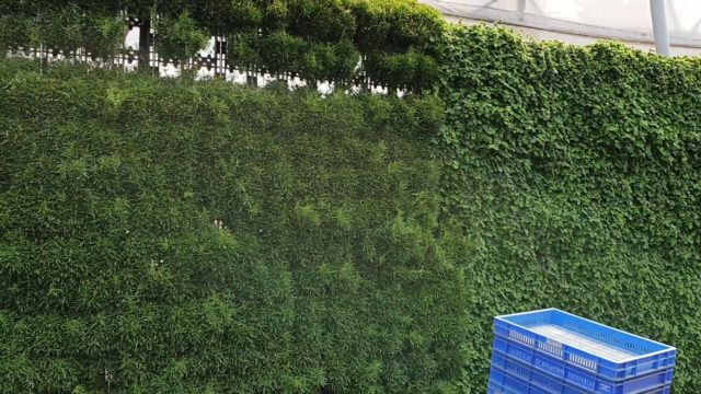 Sanjay Nursery Vertical Garden green wall contact no.9822332167