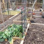 All About Vegetable Gardening Taught in a Real Time Series: Subscribe, Learn, Grow & Ask Questions
