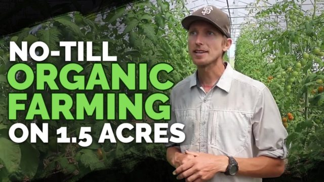 No-Till Farming and Market Gardening in Zone 5b, 5,200ft (FULL TOUR)