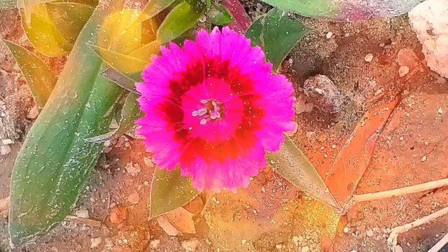 TOP Health Benefits of Gardening. Green Stress Therapy.#gardening,#healthbenefits,#grow,#garden