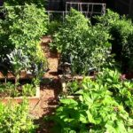 How to Grow a lot of Food in a Small Garden – 9 EZ tips