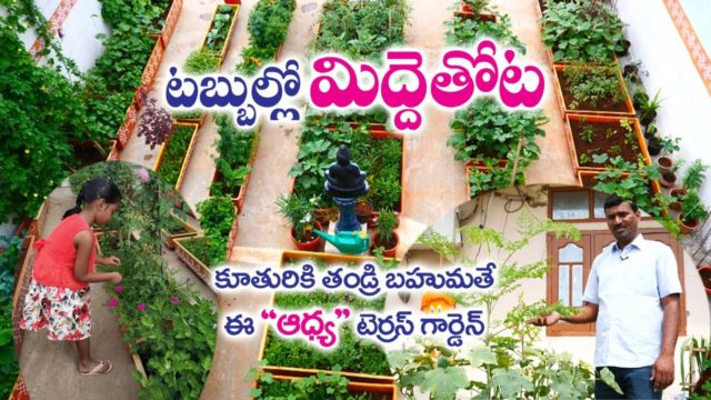 Terrace Garden in Fiber Tubs || A Father Gift to Daughter || Jeevan Reddy | Ghatkesar | Rytunestham
