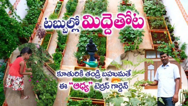Terrace Garden in Fiber Tubs || A Father Gift to Daughter || Jeevan Reddy | Ghatkesar | Rytunestham