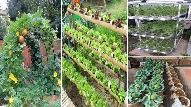 40 Best DIY Design Ideas for a Vegetable Garden | diy garden