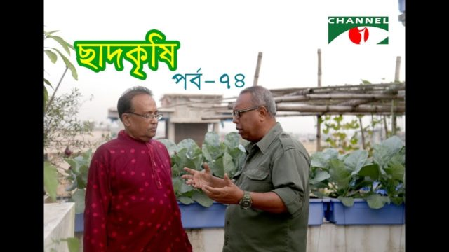 Rooftop farming || EPISODE 74 || HD || Shykh Seraj || Channel i || Roof Gardening || ছাদকৃষি ||