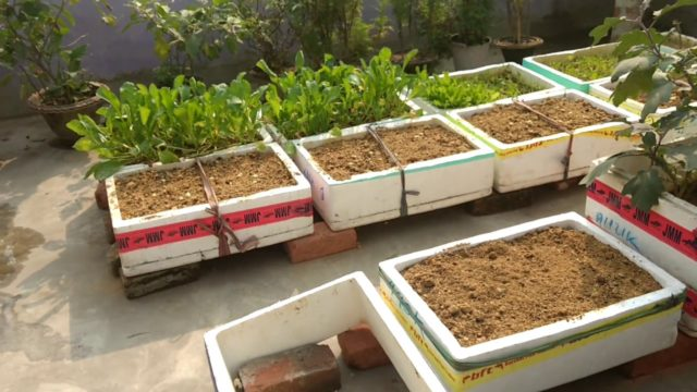 How to grow  vegetables ON ROOF, CHAD ME sabji kaise ugaye.