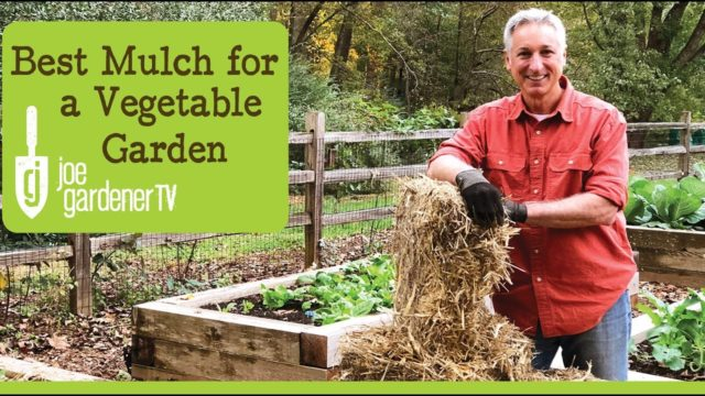 Best Mulch for a Vegetable Garden