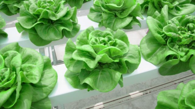 Indoor Farming: the future for food production