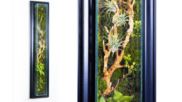 DIY Living Wall Moss Terrarium