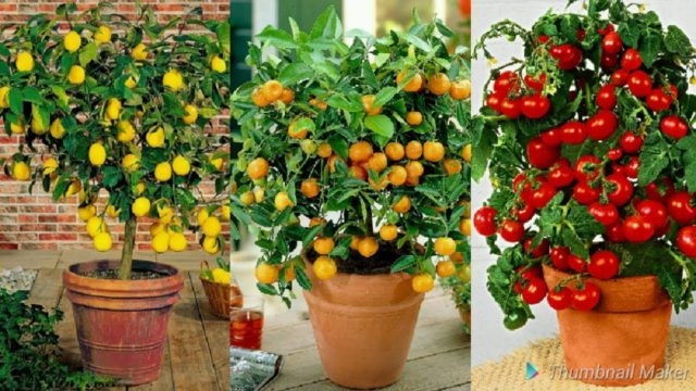 9 Edible Plants You Can Easily Grow Indoors