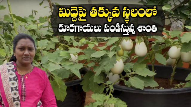 How To Make Terrace Vegetable Garden || ShantiDheeraj || SumanTV Tree