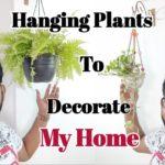 Interior & Exterior Hanging Plants to Decorate My Home   Indoor Hanging Planters