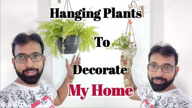 Interior & Exterior Hanging Plants to Decorate My Home | Indoor Hanging Planters