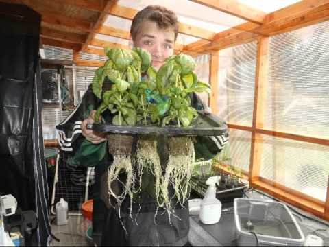 Senior Project – Sustainable Hydroponics