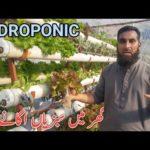 Hydroponic System by Dr. Sajid Iqbal Sandhu |Hydroponics farming, hindi/urdu, IR FARM