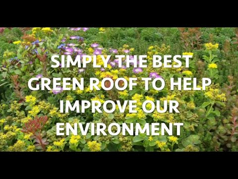 WaterGrip – Most Sustainable Green Roof in the Industry
