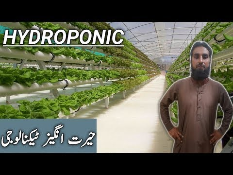 Hydroponics how it works |Advantages of hydroponics system, IR FARM, hindi/urdu