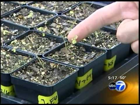 Plant Conservation Science Center on ABC-7 Chicago