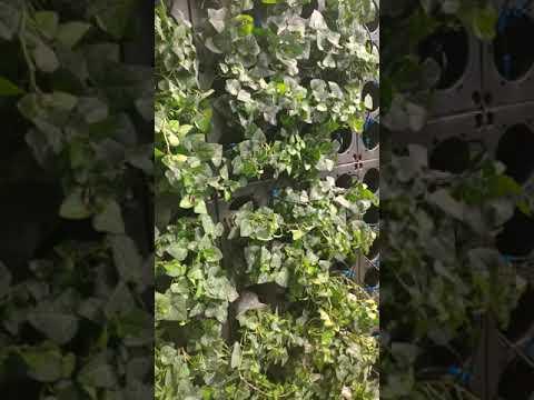 Decorative Living Wall Wholesale Outdoor Plastic Planter Pots Vertical Garden Wall System