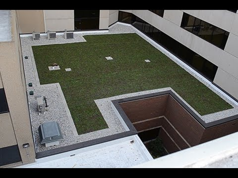 Al's Blog: Munson Medical Center Green Roof