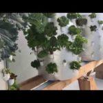 Aeroponic Vertical Greenhouse Garden Update