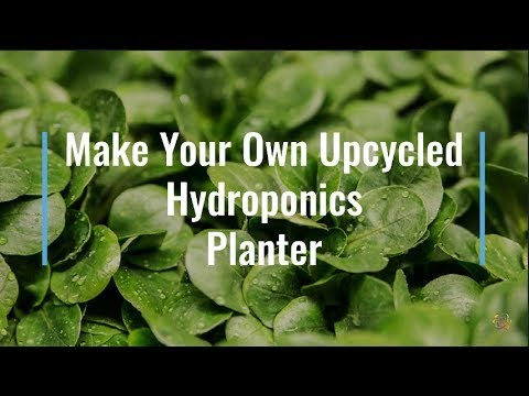 Make an Upcycled Hydroponics Planter