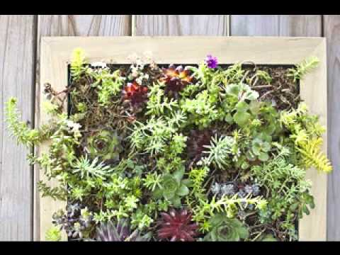 Vertical garden succulents ideas