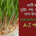 মাটি ছাড়া ঘাস উৎপাদন ll Hydroponic system ll cow and goat fodder production bangla.