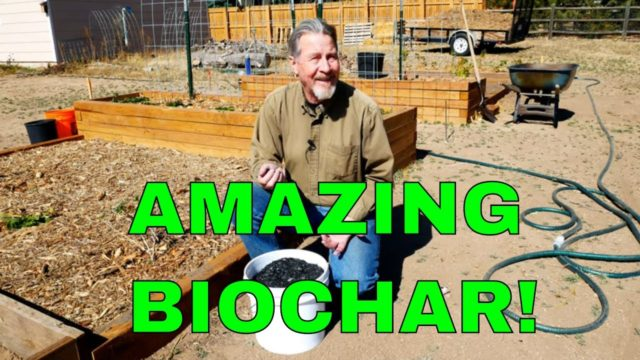 How to Use Biochar in Your Garden (Amazing Benefits)