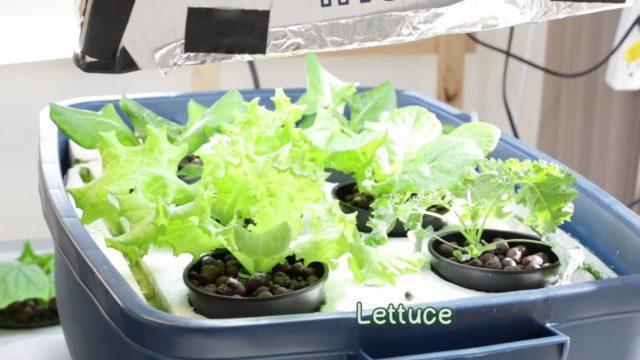 Adventures in Indoor Hydroponic Gardening