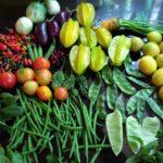 Rooftop Terrace Garden & Backyard Garden Over View | Harvesting Vegetables & Fruits