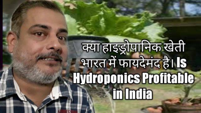 Is Hydroponics Profitable in India: क्या भारत मे हाइड्रोपानिक खेती मे फायदा है