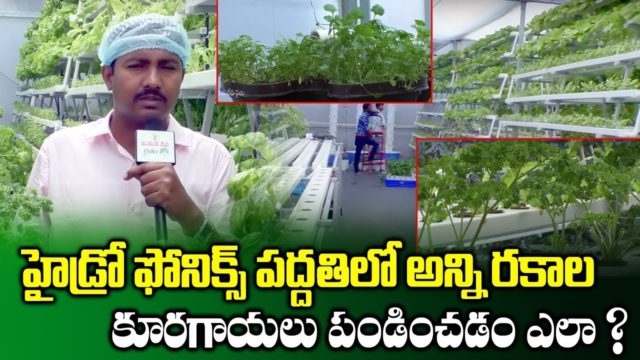 Hydroponic Vegetable Farming Ideas | Dr Satyanarayaan Reddy | Agriculture Technology | SumanTV Rythu