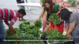 Aquaponics Vertical Farming – CFFRC x Homegrown Farm Semenyih