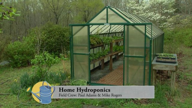 Home Hydroponic System; A Low Maintenance System for Growing Food