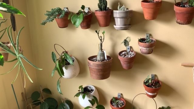 How to mount your houseplants to your wall