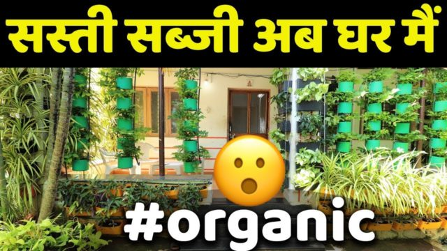 Vertical Farming at Home | घर पे उगाये Organic सब्जी | Home Gardening