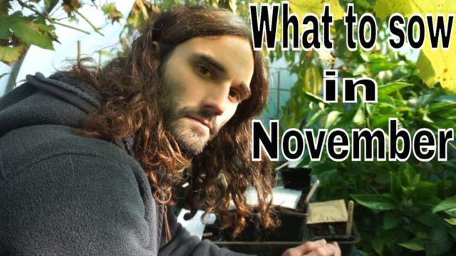 Vegetable seeds to sow in November.
