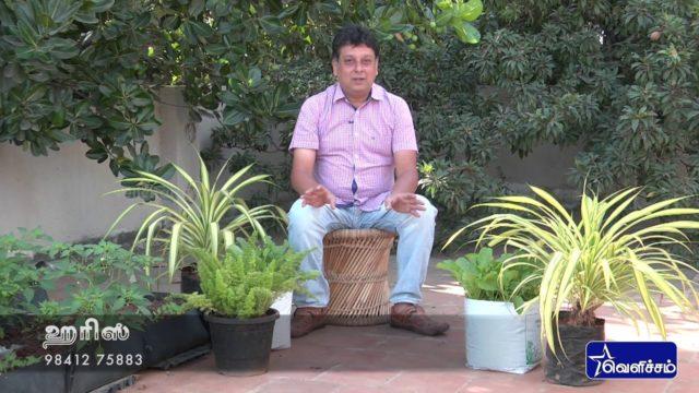 En Veetu Thottathil Epi -13 |Terrace-and-Roof Gardening | Videos | Velicham Tv Entertainment