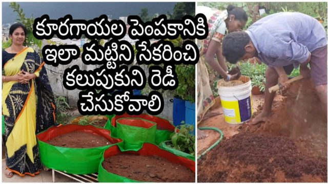 How to collect n mix soil for vegetable gardening?మట్టిని తెచ్చి కలుపుకొని ఇలా  సిద్ధం చేసుకోండి.