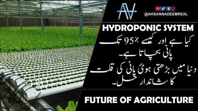 what is hydroponics system and how it saves 95% water | explained in urdu/hindi