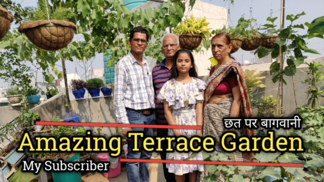 Amazing Terrace Indian Gardening | छत पर बागवानी | Vegetable Gardening