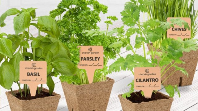 How to grow herbs indoors – Herb Garden Starter Kit by Cherish Garden
