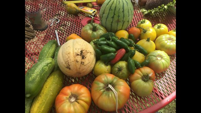 Vegetable Gardening in North Texas – Growing Through the Years