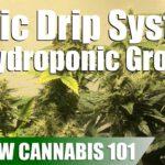 Drip System Hydroponics Timelapse Grow – Clone To Harvest