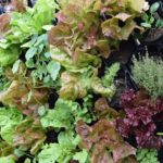 Introduction to the Planted Places Edible Living Wall Program