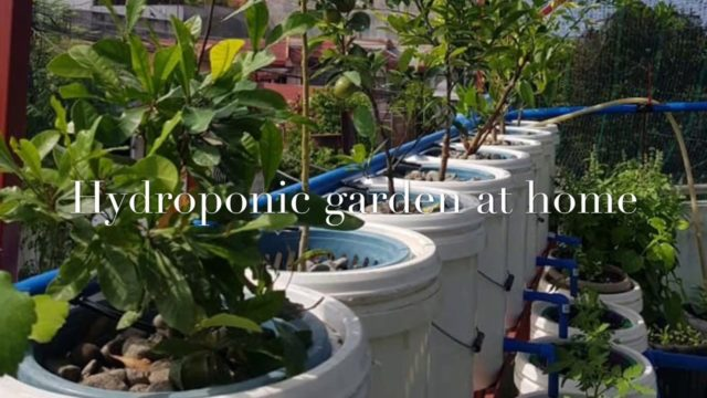 BEST HYDROPONIC GARDEN at Home , Hydroponic garden- hydroponic system