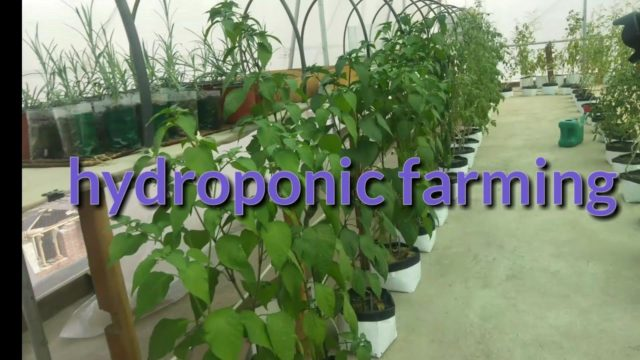 Hydroponic farming on  house rooftop… / Nepal