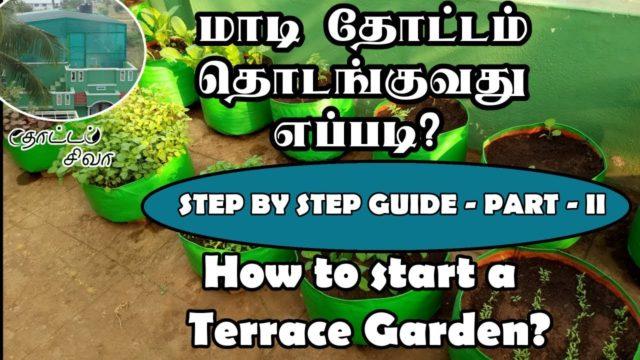 How to start terrace garden | மாடி தோட்டம் தொடங்குவது எப்படி? | Part-II